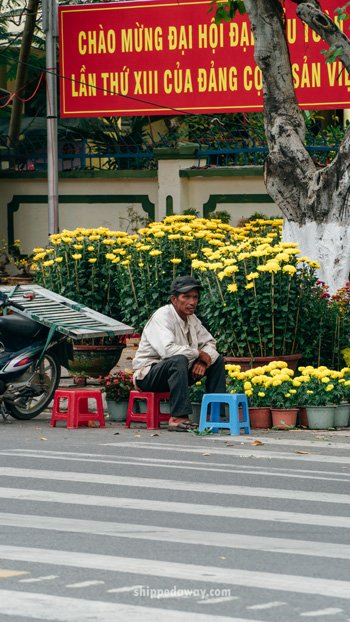 Man on the street selling yellow chrysanthemum for Tet, Vietnamese New Year